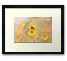 Helenium And Little Bee Framed Print