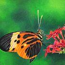 Orange Butterfly by lanadi