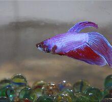 Something Fishy by Chet  King