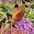 """Butterfly"" Bush by Anne E Colturi"