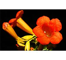 Blooming Vine Photographic Print