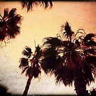 Palms II by geophotographic