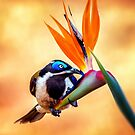 Bird in Paradise by tracielouise