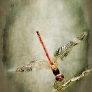 Red Dragon by KBritt