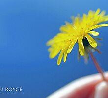 My Sunshine by jenniroyce