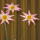 Three pink Dahlias by AuntieBarbie
