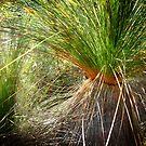 grass tree by GrowingWild