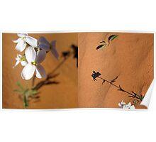 Simpson Desert Wild Flowers Poster