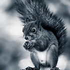 Squirrel in Monochrome by Ari Salmela