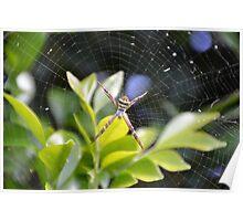 The Garden Spider Poster