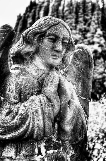 Stone Angel by Vicki Field