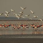Flamingo, Magadi lake, Kenia by Konstantin Zhuravlev