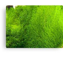 Seaweed, Great Barrier Reef Canvas Print