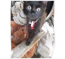 Cat/barrel (2 of 2) -(030912)- Digital photo Poster