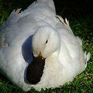 My Little Dodo Bird by Gabrielle  Lees