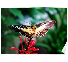 Butterfly planking Poster