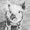 &quot;Oink&quot; - Cute lil&#x27; piglet drawn with a graphite medium by iLovePencils