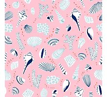 Shells on pink background Photographic Print