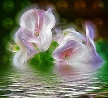 FLORAL REFLECTION by PALLABI ROY