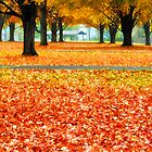 Autumn in the Park by KellyHeaton