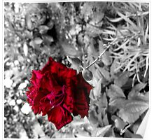 Selective colour flower Poster