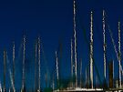 Masts by cclaude
