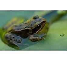 Frog! Photographic Print