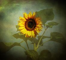 Sunburst by Carol Bleasdale