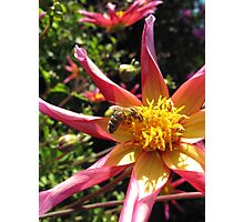Bee on Flower 1 Photographic Print