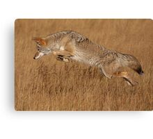 Coyote in Flight Canvas Print