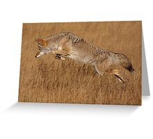 Coyote in Flight Greeting Card