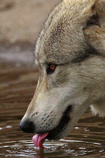 Thirsty, But Watchful by William C. Gladish