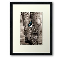 Butterfly Blue Framed Print