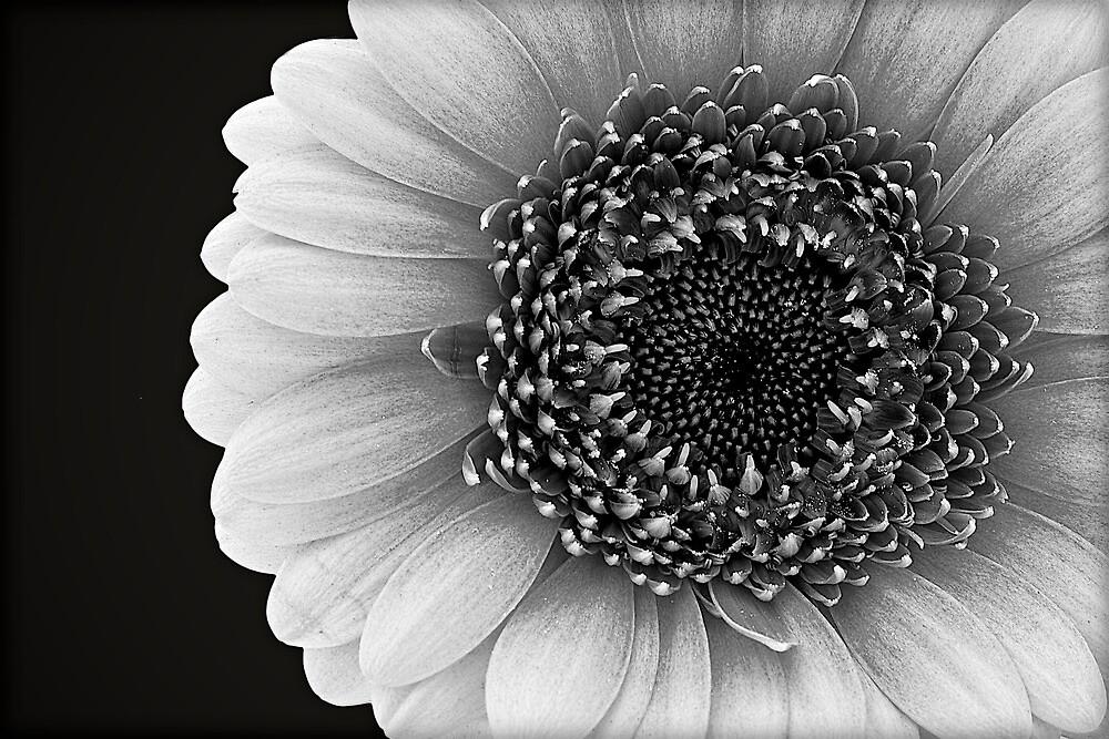 Flower Power by fernblacker