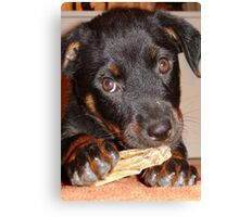 Rottweiler Puppy Chewing a Treat Canvas Print