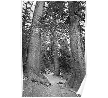 Rocky Mountain Forest Nature Path BW Poster
