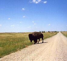 Buffalo Up Close in South Dakota by aweddingtheme