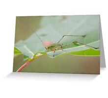 Grasshopper! Greeting Card