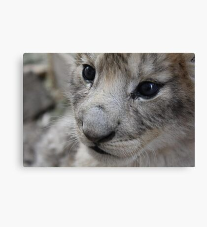 cute baby lion cub Canvas Print