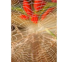 Misty Morning Spider's Web Photographic Print