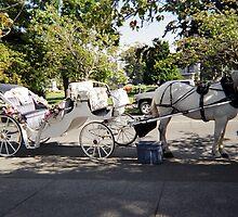 Horsedrawn Carriage Victoria, British Columbia by Sabrina Messenger
