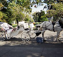 Horsedrawn Carriage Victoria, British Columbia by Sabrina Messenger