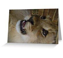 baby lion cub growling Greeting Card