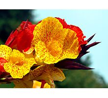 Colourful Canna Lily Photographic Print