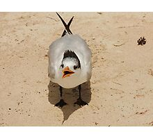 shouting seagull in Mexico Photographic Print