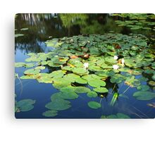 lilys in a lake Canvas Print