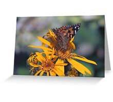 Butterfly on orange flower Greeting Card