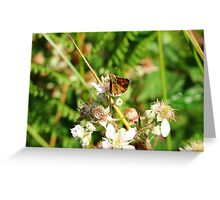 butterfly on blackberry bush Greeting Card