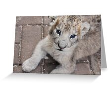 baby lion cub relaxing Greeting Card