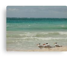 seagulls on the beach, keeping an eye on the sea Canvas Print